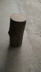 Beech wood log